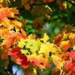 Kleur in huis met herfsttinten