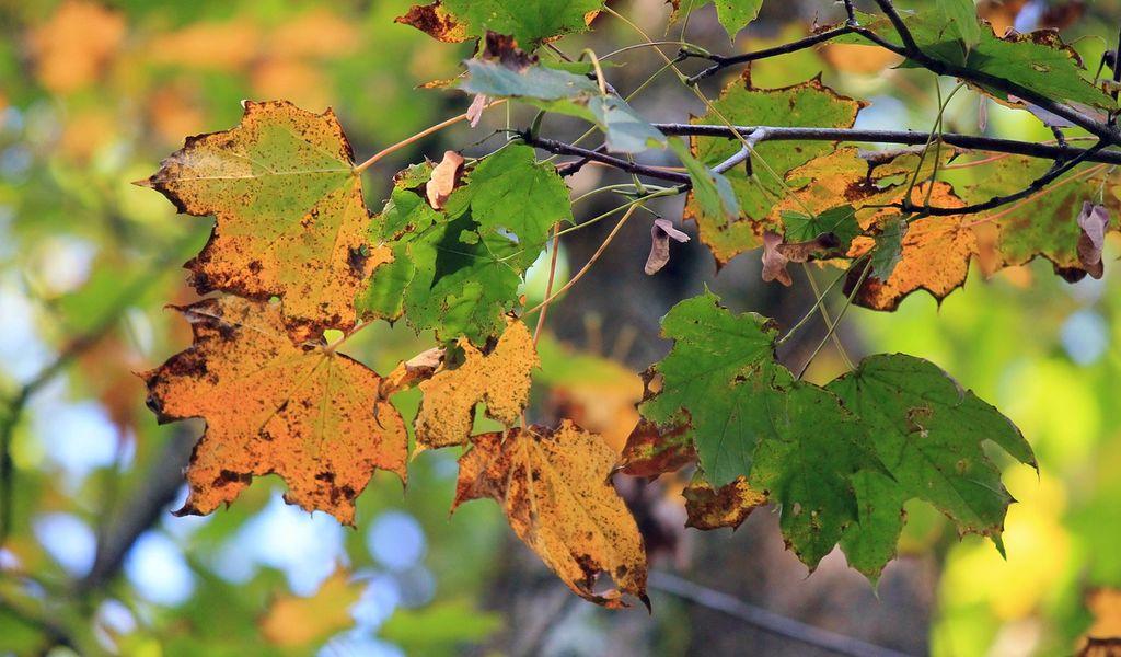 okergoud herfst