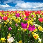 Woonbeurzen & tuinbeurzen – voorjaar 2016