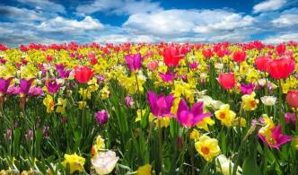 voorjaarsbeurzen 206 tuin wonen